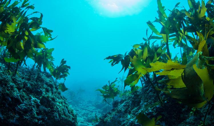 Natura-tec Marine Seadew EPS™: attivo skincare a base di estratti di microalghe